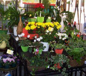 Gift Shoppe House Plants