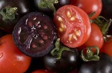 Organic Vegetable Starts